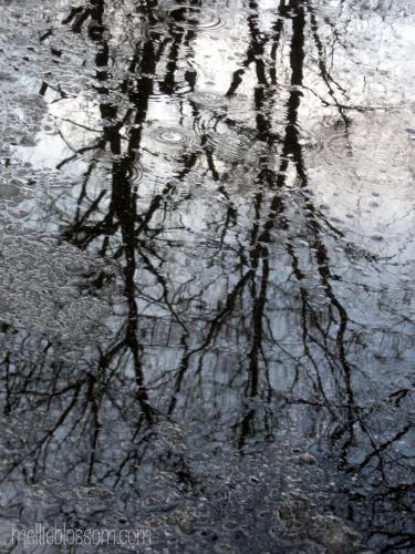 mellieblossom ~*~Gratitude Challenge~*~ Day 1: rain