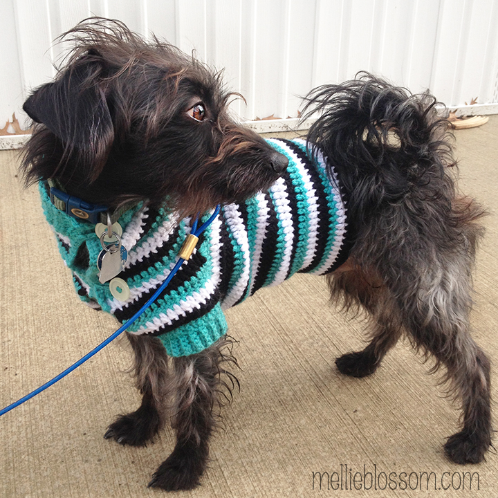 Crochet Dog Sweater : Crochet Dog Sweater - mellieblossom.com